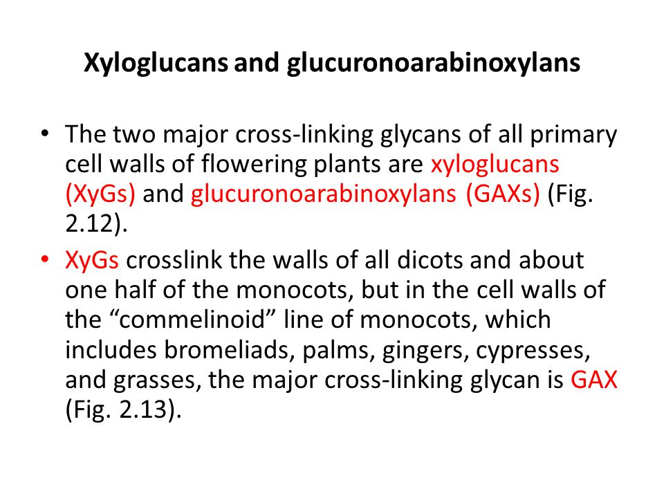Xyloglucans and glucuronoarabinoxylans