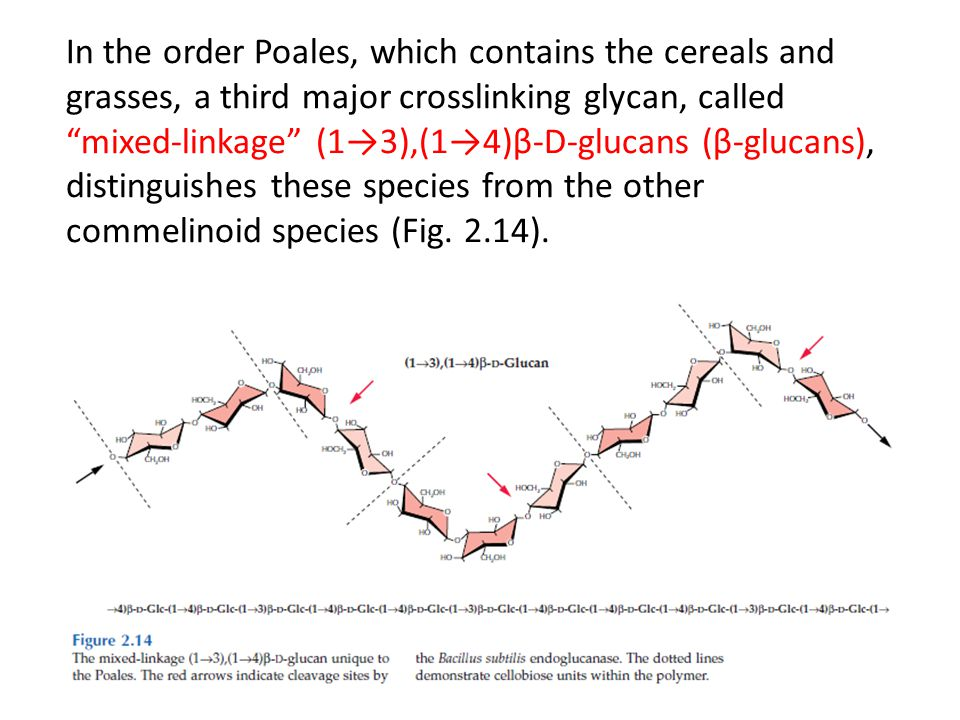 In the order Poales, which contains the cereals and grasses, a third major crosslinking glycan, called mixed-linkage (1→3),(1→4)β-D-glucans (β-glucans), distinguishes these species from the other commelinoid species (Fig.