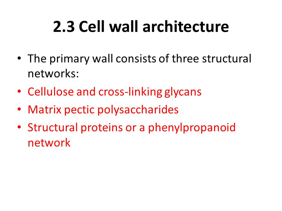 2.3 Cell wall architecture