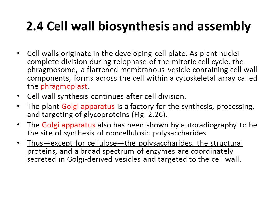 2.4 Cell wall biosynthesis and assembly