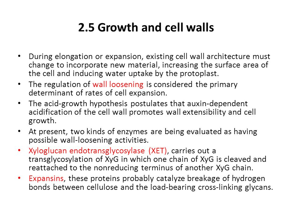 2.5 Growth and cell walls