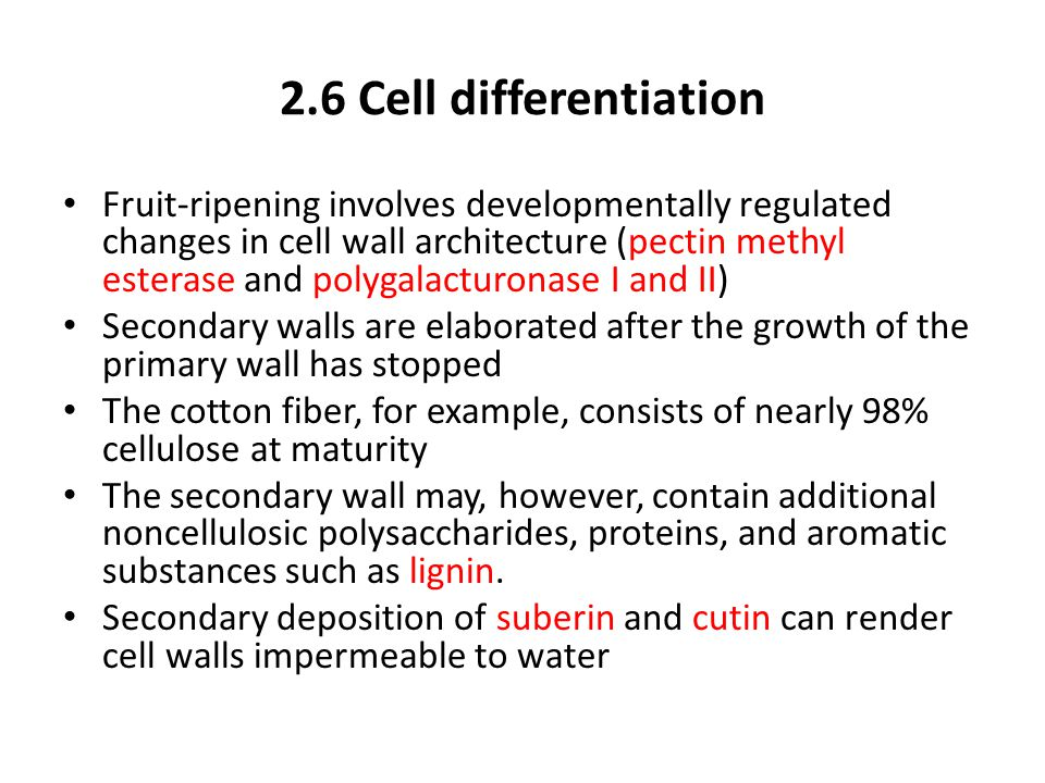2.6 Cell differentiation