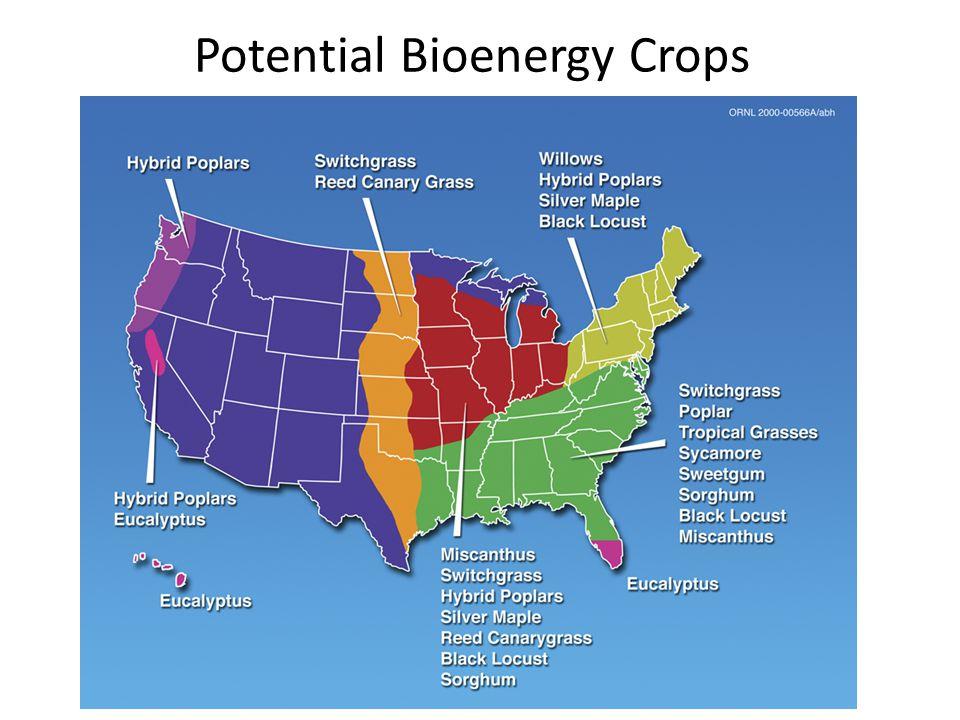 Potential Bioenergy Crops