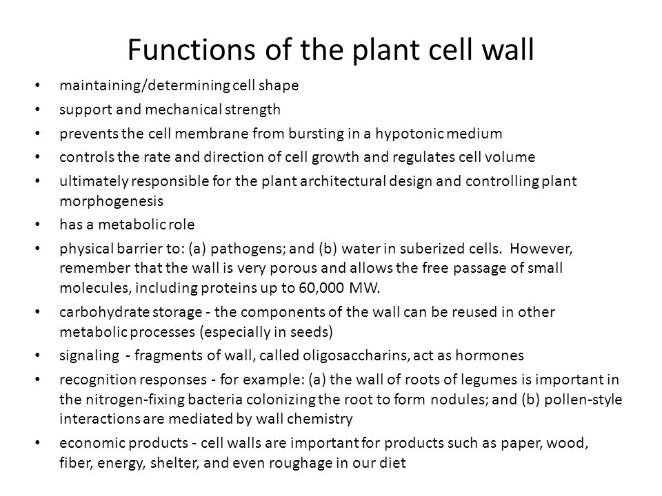 Functions of the plant cell wall