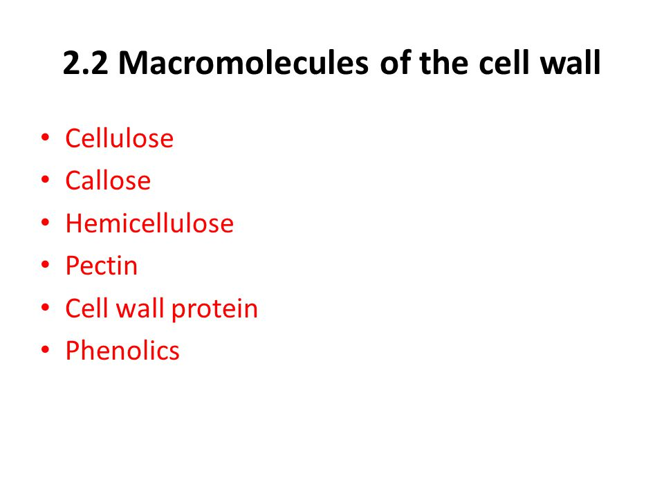 2.2 Macromolecules of the cell wall