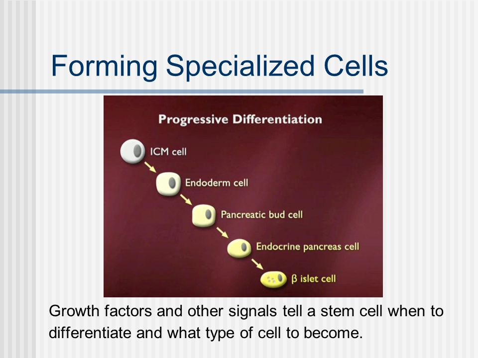 Forming Specialized Cells