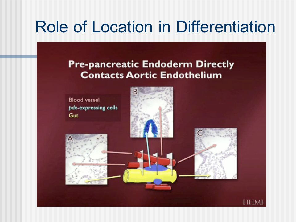 Role of Location in Differentiation