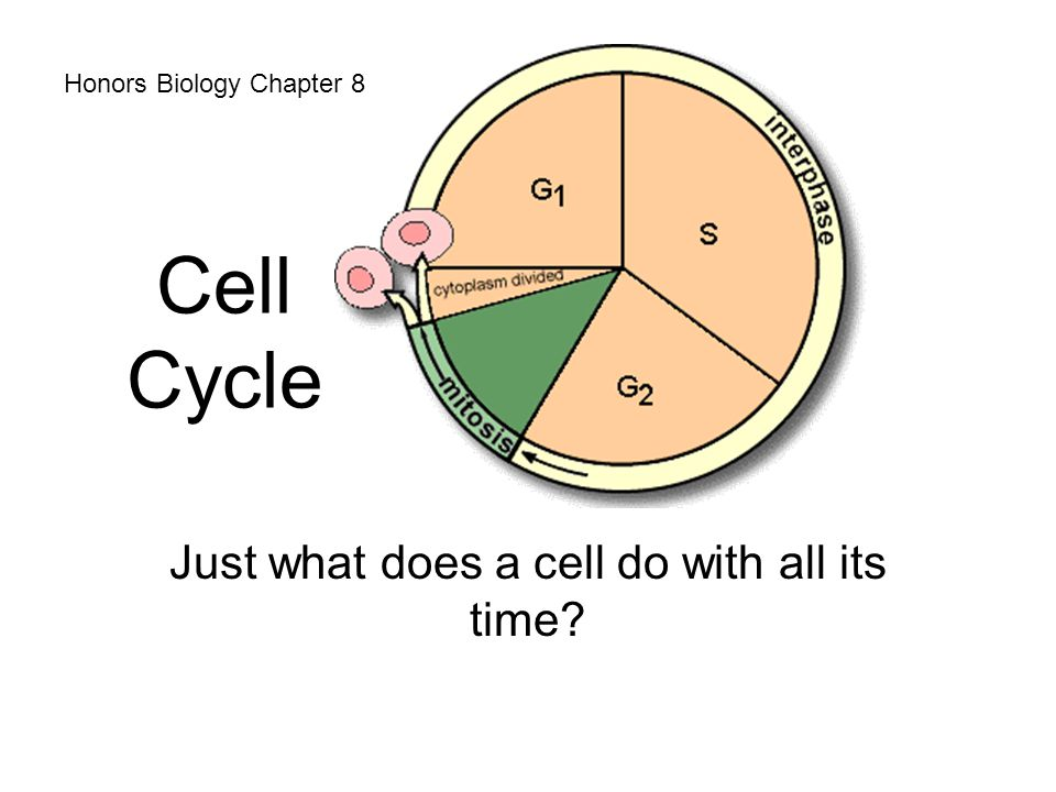 Just what does a cell do with all its time