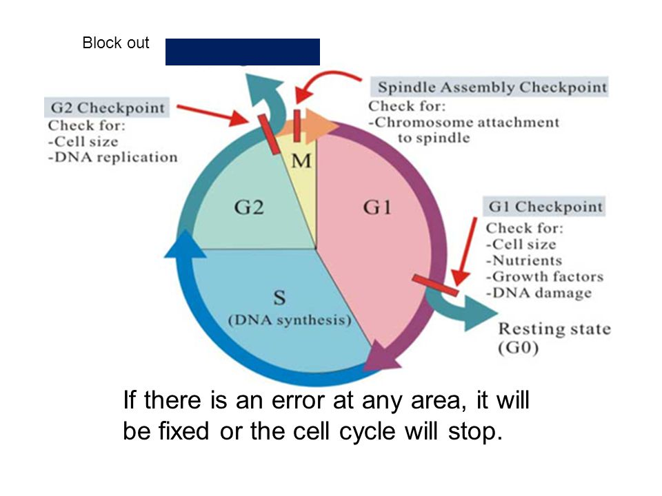 Block out If there is an error at any area, it will be fixed or the cell cycle will stop.