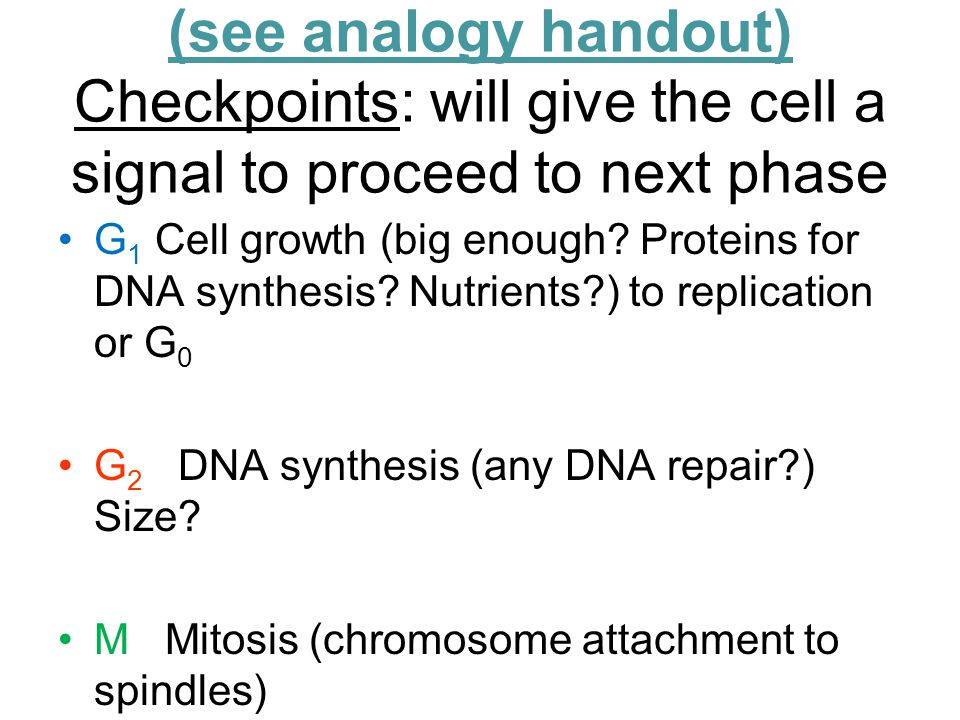 (see analogy handout) Checkpoints: will give the cell a signal to proceed to next phase