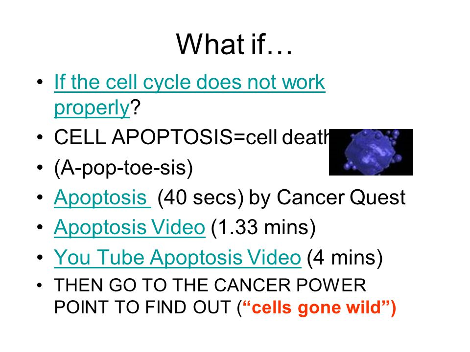 What if… If the cell cycle does not work properly