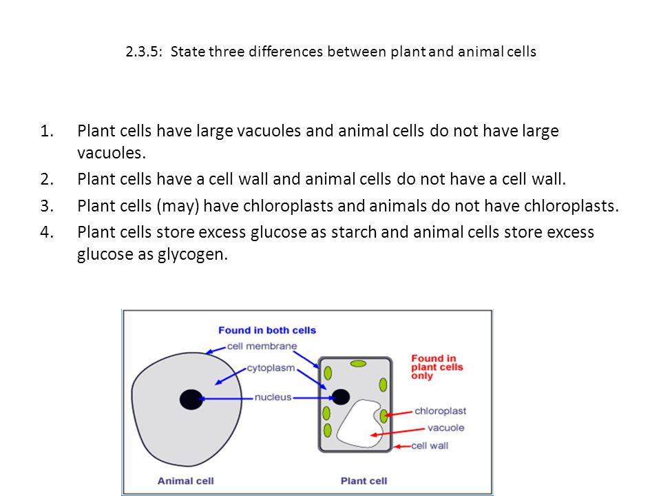 2.3.5: State three differences between plant and animal cells