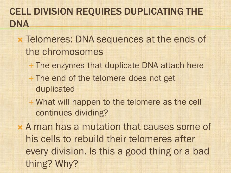 Cell Division Requires Duplicating the DNA