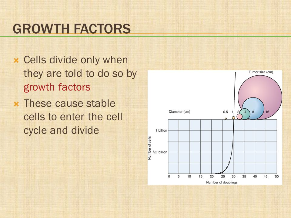 Growth Factors Cells divide only when they are told to do so by growth factors.