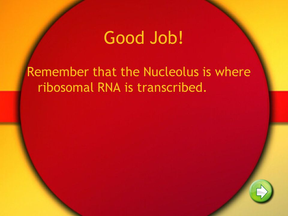 Good Job! Remember that the Nucleolus is where ribosomal RNA is transcribed.