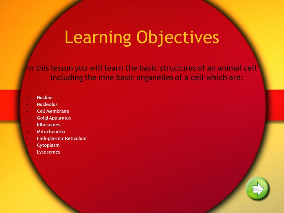 Learning Objectives In this lesson you will learn the basic structures of an animal cell including the nine basic organelles of a cell which are: