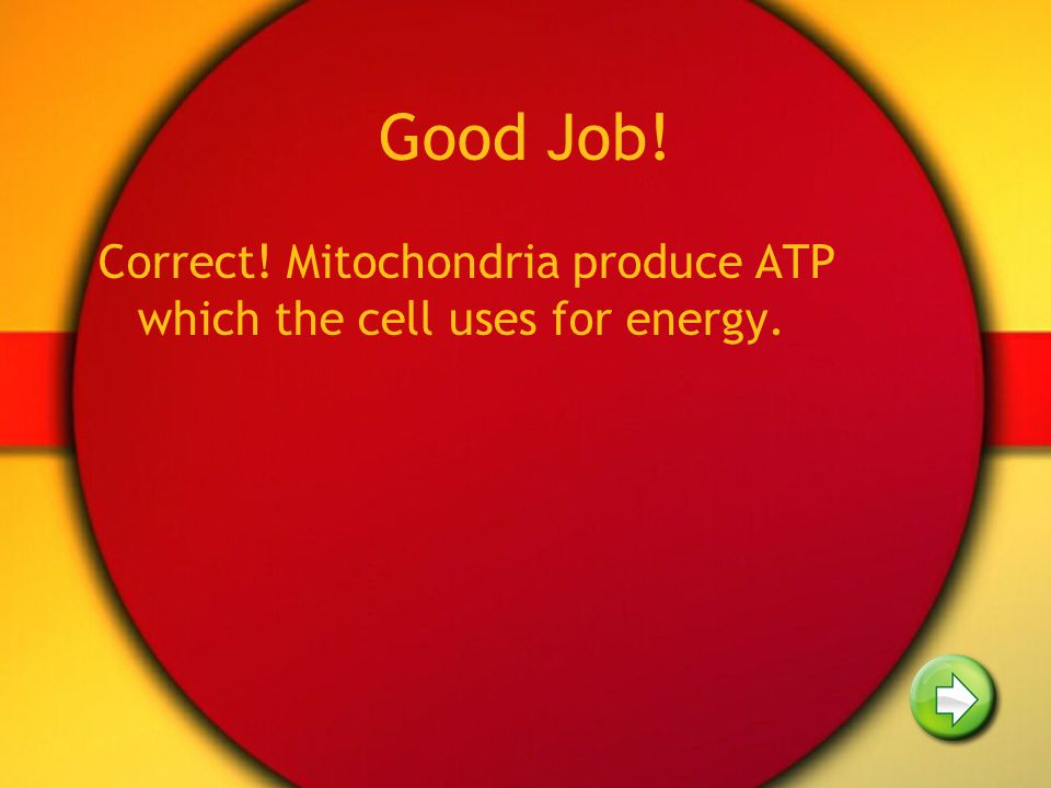 Good Job! Correct! Mitochondria produce ATP which the cell uses for energy.