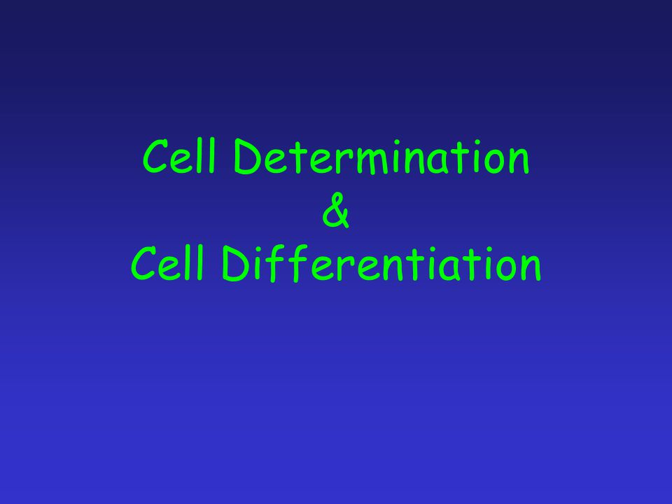 Cell Determination & Cell Differentiation