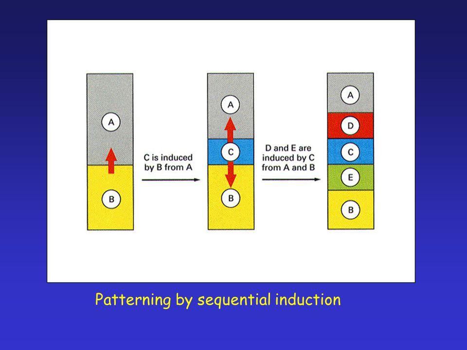 Patterning by sequential induction