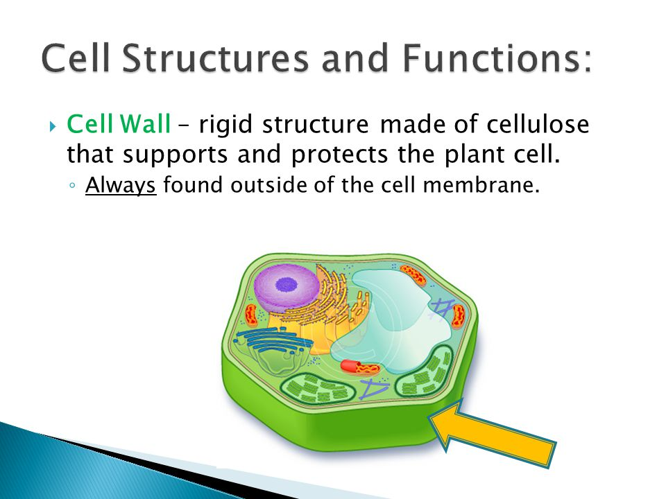 Cell Structures and Functions: