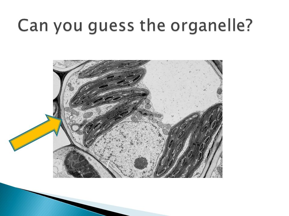 Can you guess the organelle