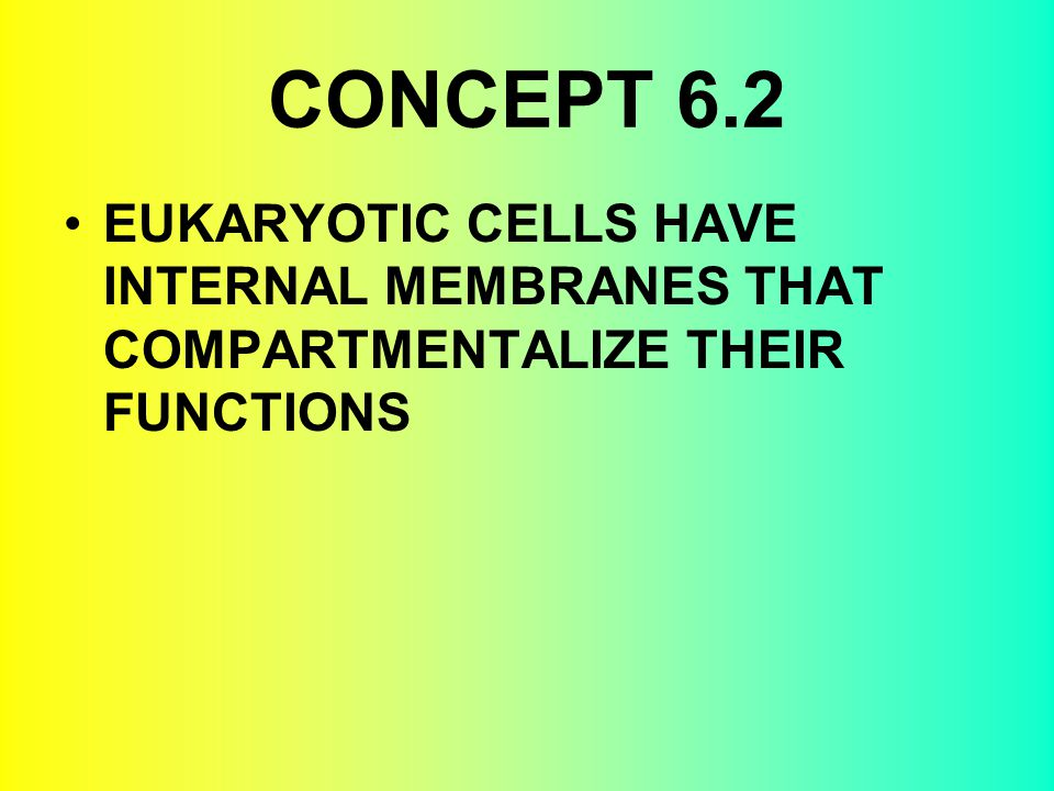 CONCEPT 6.2 EUKARYOTIC CELLS HAVE INTERNAL MEMBRANES THAT COMPARTMENTALIZE THEIR FUNCTIONS