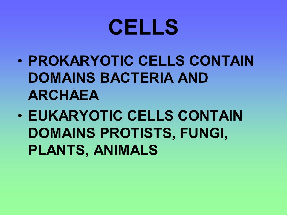 CELLS PROKARYOTIC CELLS CONTAIN DOMAINS BACTERIA AND ARCHAEA