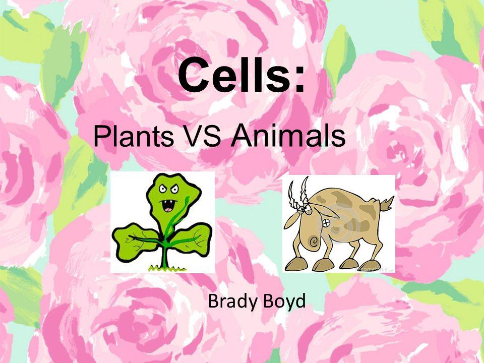 Cells: Plants VS Animals Brady Boyd