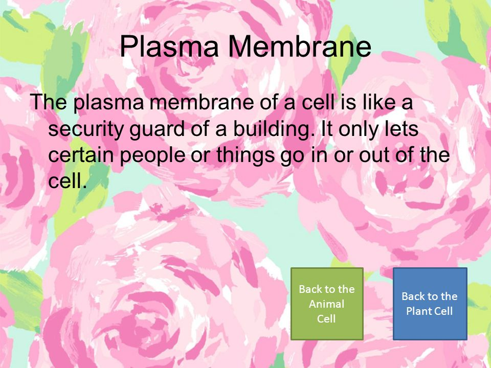 Plasma Membrane The plasma membrane of a cell is like a security guard of a building. It only lets certain people or things go in or out of the cell.