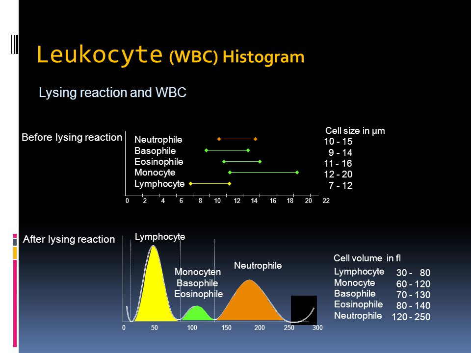 Leukocyte (WBC) Histogram