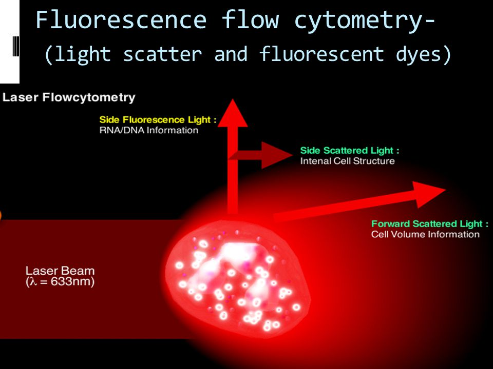 Fluorescence flow cytometry- (light scatter and fluorescent dyes)