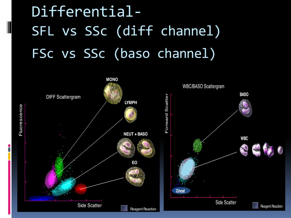 Differential- FSc vs SSc (baso channel) Differential scattergrams