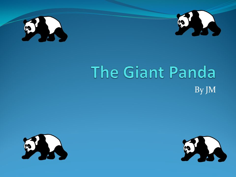 The Giant Panda By JM.