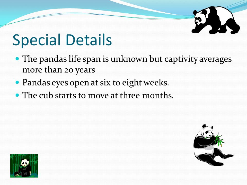Special Details The pandas life span is unknown but captivity averages more than 20 years. Pandas eyes open at six to eight weeks.