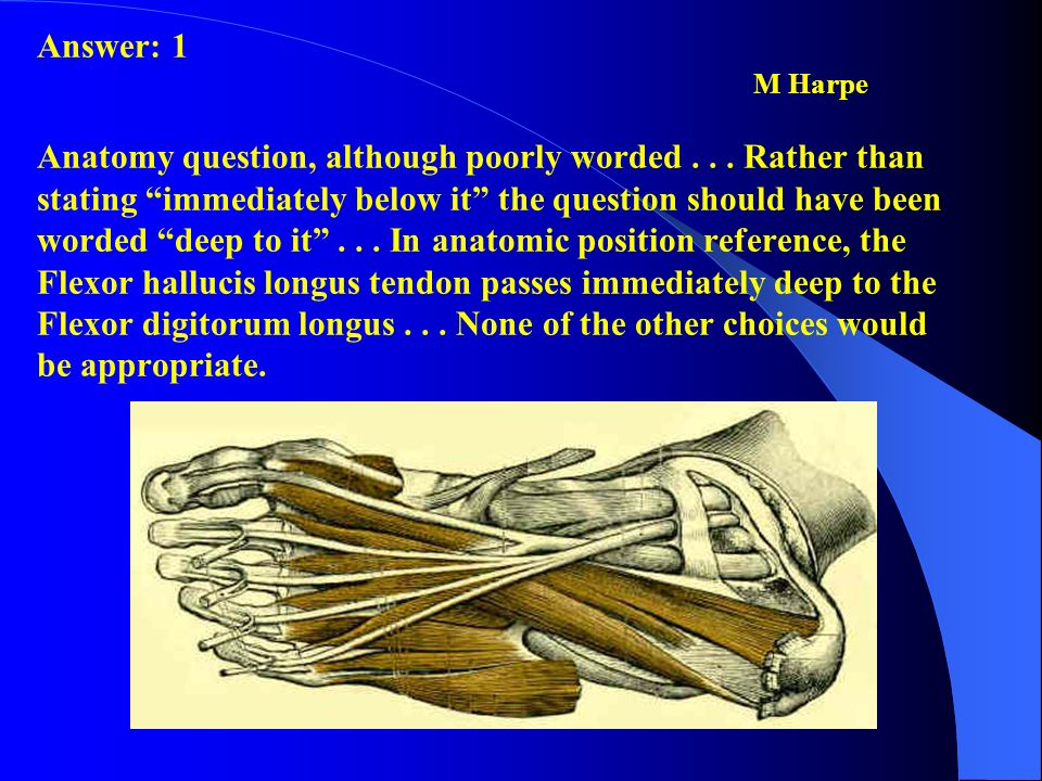 Answer: 1. M Harpe. Anatomy question, although poorly worded