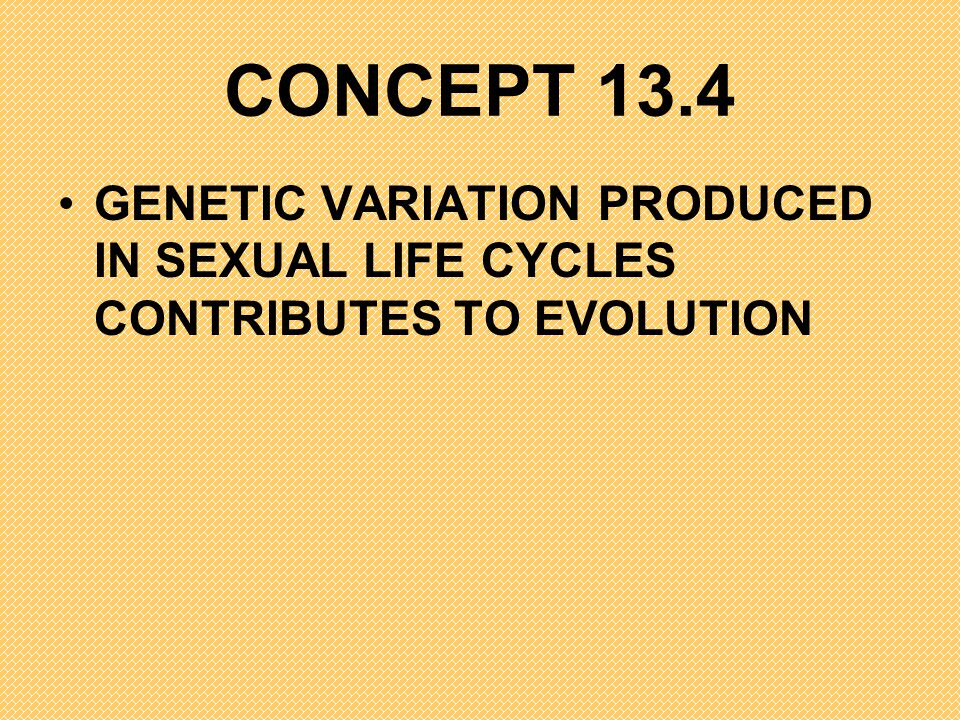 CONCEPT 13.4 GENETIC VARIATION PRODUCED IN SEXUAL LIFE CYCLES CONTRIBUTES TO EVOLUTION