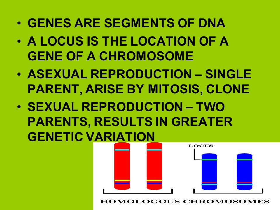 GENES ARE SEGMENTS OF DNA