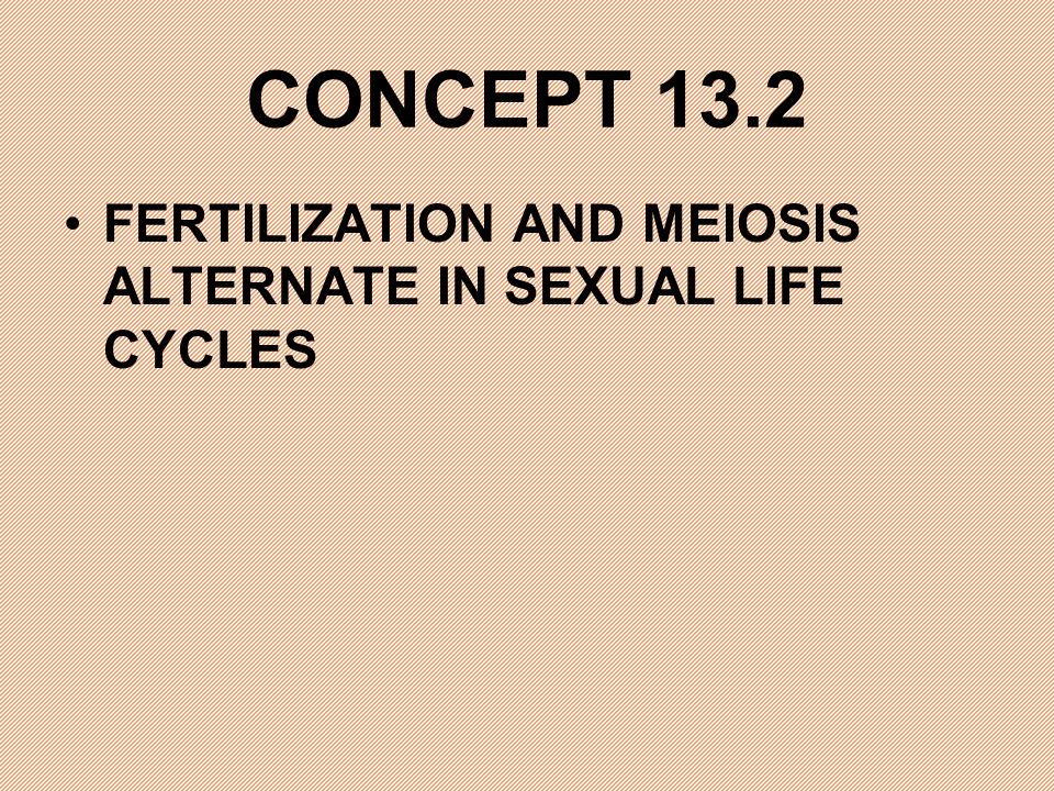 CONCEPT 13.2 FERTILIZATION AND MEIOSIS ALTERNATE IN SEXUAL LIFE CYCLES