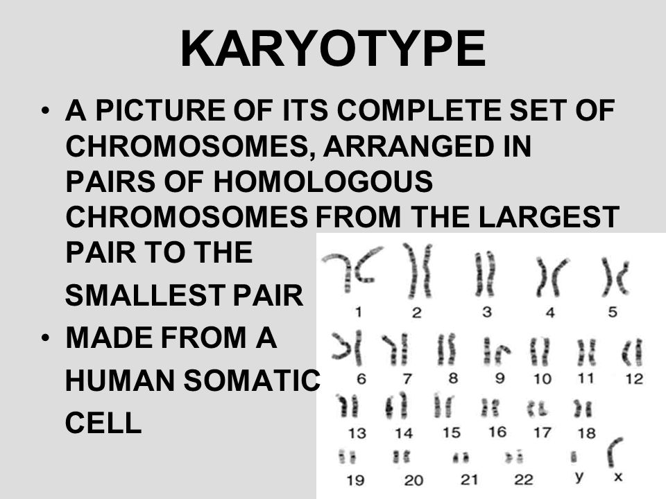 KARYOTYPE A PICTURE OF ITS COMPLETE SET OF CHROMOSOMES, ARRANGED IN PAIRS OF HOMOLOGOUS CHROMOSOMES FROM THE LARGEST PAIR TO THE.