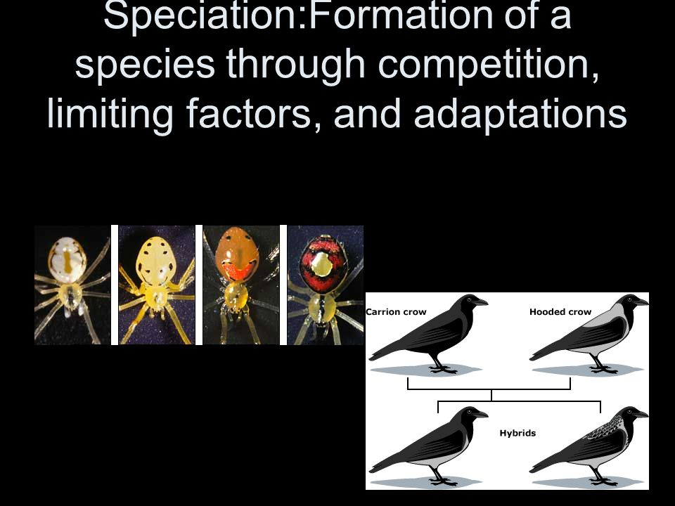 Speciation:Formation of a species through competition, limiting factors, and adaptations