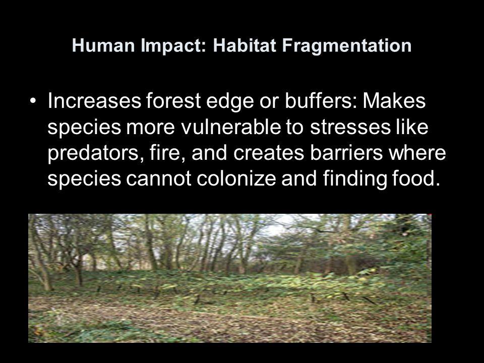 Human Impact: Habitat Fragmentation