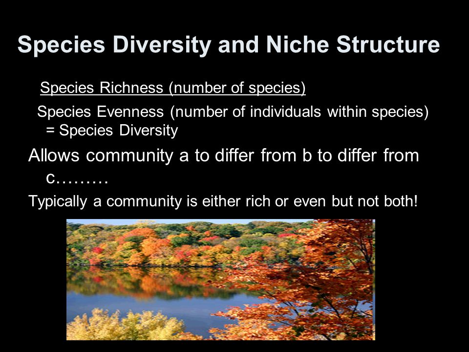 Species Diversity and Niche Structure
