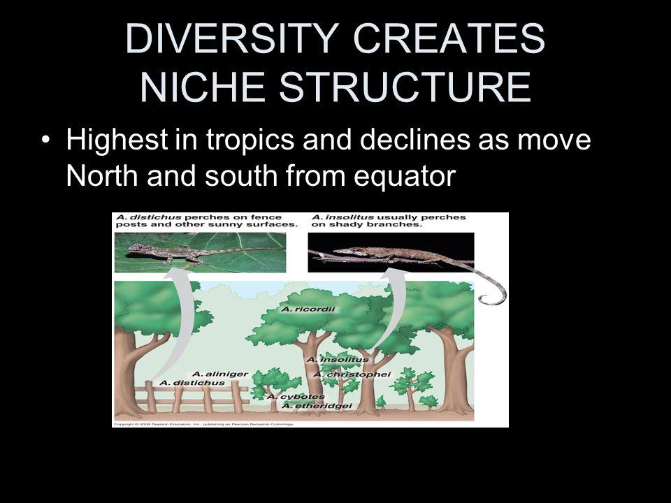 DIVERSITY CREATES NICHE STRUCTURE