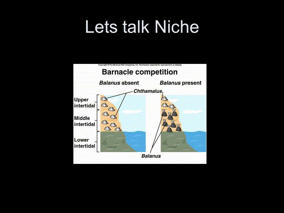 Lets talk Niche