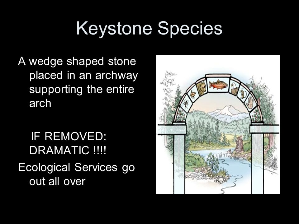 Keystone Species A wedge shaped stone placed in an archway supporting the entire arch. IF REMOVED: DRAMATIC !!!!