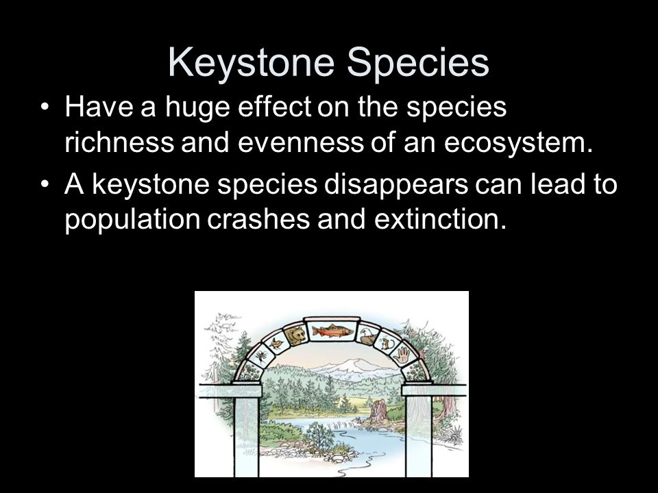 Keystone Species Have a huge effect on the species richness and evenness of an ecosystem.