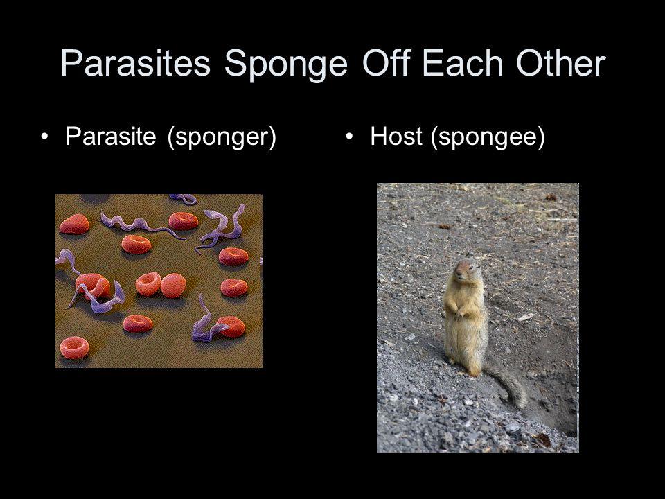 Parasites Sponge Off Each Other