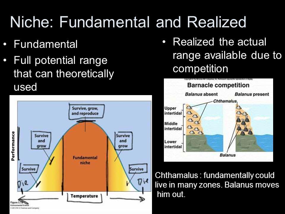 Niche: Fundamental and Realized
