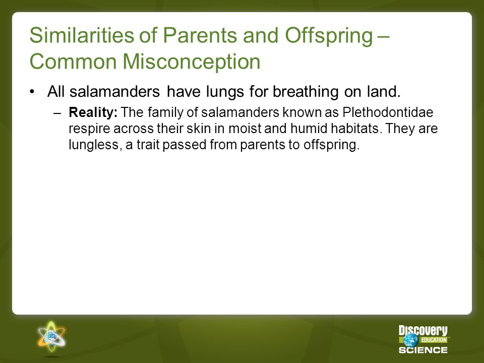 Similarities of Parents and Offspring – Common Misconception