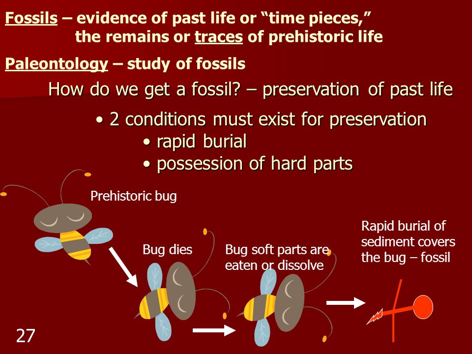 How do we get a fossil – preservation of past life